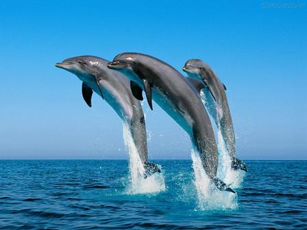 Golfinho-nariz-de-garrafa | Foto Ilustração