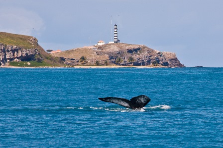Parque Nacional de Abrolhos | Foto Instituto Baleia Jubarte/ Enrico Marcovaldi