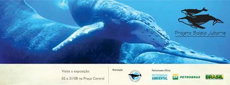 Projeto Baleia Jubarte | Foto Divulgação