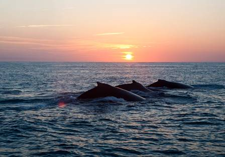 Baleias | Foto IBJ/Reprodução